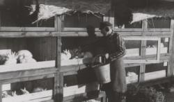 Ein Häftling füttert die Kaninchen. Propaganda·aufnahme von der SS. Das Foto ist von 1940 oder 1941. (KZ-Gedenk·stätte Dachau)