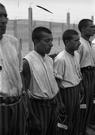 Czterej więźniowie w pasiastych spodniach stoją na baczność, zdjęcie propagandowe SS (Archiwum Narodowe)