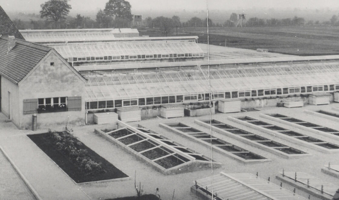 Adjoining a small building, located on the left of the photo, is a long greenhouse. Positioned parallel behind it are two further greenhouses identical in size and form. In the foreground area are a number of small garden beds.